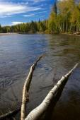 Chena river with fallen logs — Stockfoto