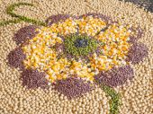Serial grain and seeds collective in flower — Stock Photo