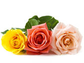 Roses on white isolated  — Stock Photo