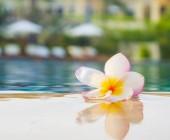 Plumeria flower on water — Stock Photo