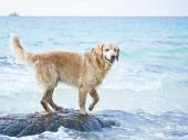 Lonely dog on shore — Stock Photo
