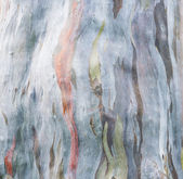 Colorful tree bark on nature, — Stock Photo
