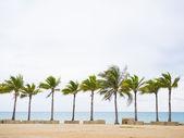 Coconut trees on the sea shore  — Foto Stock