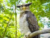 Portrait of Horned Owl looking at the camera — Stock Photo