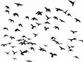 Silhouette of flying birds on white — Stock Photo