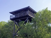 Tower in the forest for watching natural mangrove  — Stock Photo