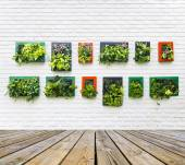 Vertical garden on white brick wall — Stockfoto