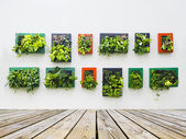 Decorated wall by vertical planting — Stock Photo
