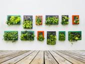 Decorated wall by vertical planting — Stockfoto