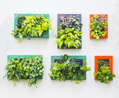 Decorated wall in vertical garden — Stockfoto