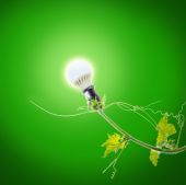Green ivy and light bulb — Stock Photo