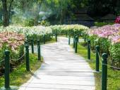 Walk way through flowers field — Foto de Stock
