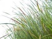 Green grass meadow on white — Stock Photo