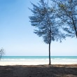 Tree in front of the sea shore  — Стоковое фото #70606579