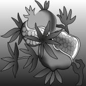 Ripe pomegranate illustration background gray monochrome — Stockvektor