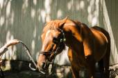 Horse with bridle — Stock Photo