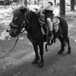 Постер, плакат: Little boy riding on pony