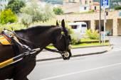 Cavalo de carruagem, andando na rua — Fotografia Stock