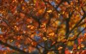 Kırmızı sonbahar ağaçlar — Stok fotoğraf