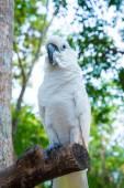 White parrot — Stock Photo