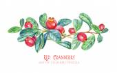 花元素,小红莓设计. — 图库照片