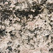 Porous sandstone — Stock Photo