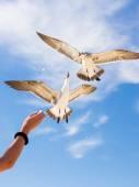 Feeding birds — Stock Photo