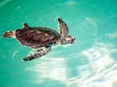 Cute endangered baby turtle — Stock Photo