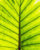 Green leaf closeup — Stock Photo