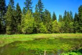 Forest pond — Stock Photo