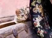Cute moroccan kitten — Stock Photo