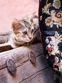 小猫在摩洛哥 — 图库照片