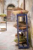 Byliny a druhy v Essaouira, Marokem — Stock fotografie