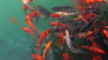 Shot of a school of fish — Stock Video