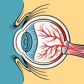 Eyeball x ray vector cartoon illustration — Stock Vector