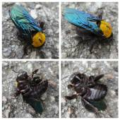 Collage with four macro photos of bee — Foto de Stock