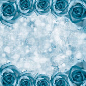 Romantic roses backgrounds — Stock Photo
