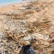 Pollution: shoes, garbages, plastic, and wastes on the beach after winter storms. Azov sea. Dolzhanskaya Spit — Stock Photo #68561999