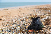 Pollution: shoes, garbages, plastic, and wastes on the beach after winter storms. Azov sea. Dolzhanskaya Spit — Stock Photo