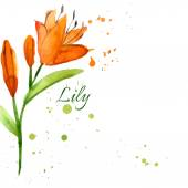 Lily flower painted watercolor — Stock Vector
