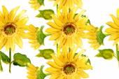 Yellow watercolor sunflowers — Stock Vector