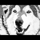 Злой волк вектор - 34