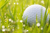 Golf ball on grass with water drops — Foto de Stock
