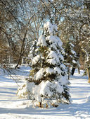 Christmas tree in winter forest — Stock Photo