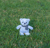 TEDDY BEAR blue color with scarf on the grass — Stock Photo