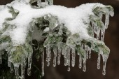 Icing rain on tree branch — Foto de Stock