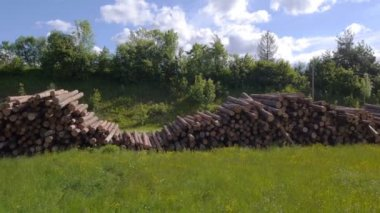 Timber logs in sunny spring — Stock Video