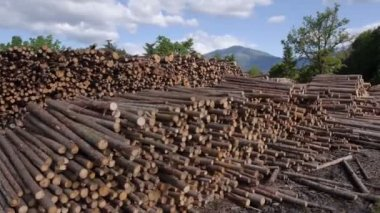 Lumber logs at the forest edge — Stock Video