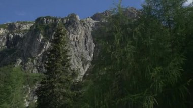 Larch trees in the mountains — Stock Video