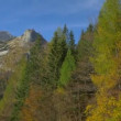 Autumn trees in the mountains — Stock Video #61193423